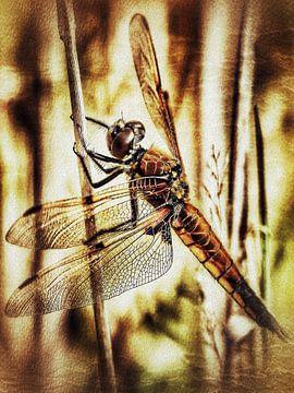 Libelle am Schilfhalm von Max Steinwald