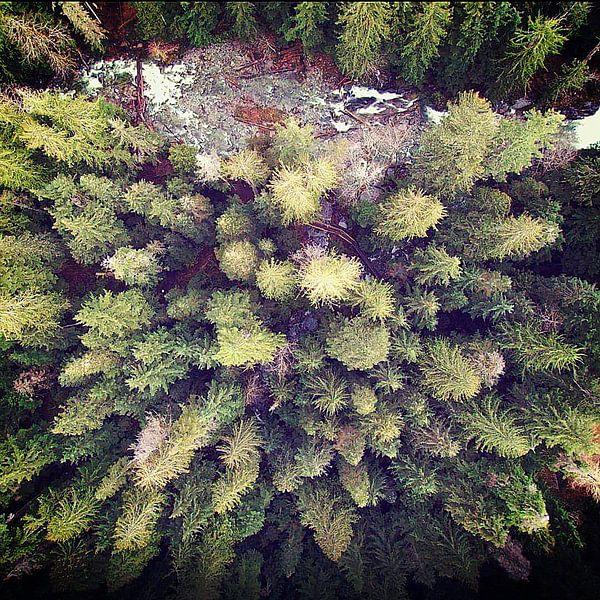Aerial Wilderness van Robin Dickinson