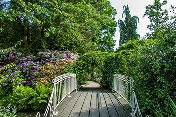 Rotterdam-Botanische Tuinen Trompenburg 01 von Hans Blommestijn