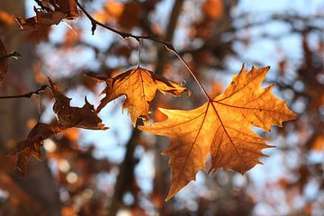 The Leaf sur Cornelis (Cees) Cornelissen