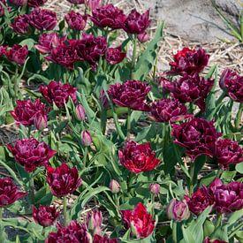 Purple flowers van Arthur Wijnen
