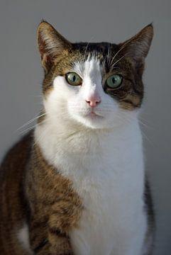 Porträt einer weiß-grau-braun gefleckten Katze von Robin Verhoef