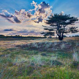 natuur en landschap van de Helderse duinen van eric van der eijk