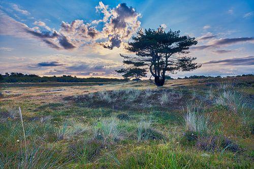 natuur en landschap van de Helderse duinen
