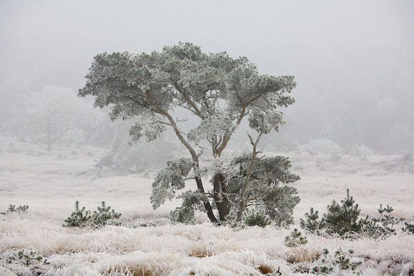 Winter sur Jim van Iterson
