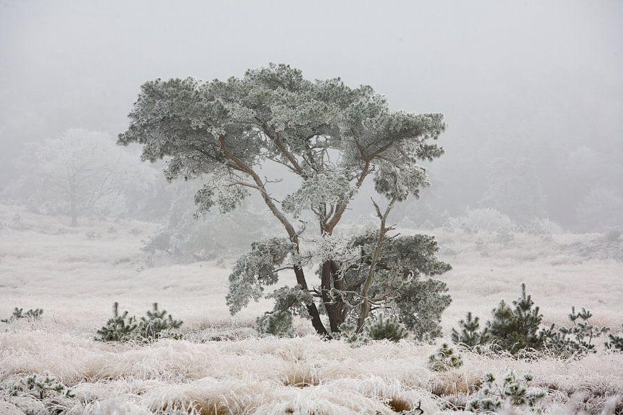 Winter van Jim van Iterson