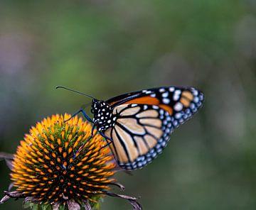 Gläserner Schmetterling von Jessica Jongeneel