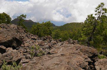 Vulkanisch landschap met dennen. von Carola van Rooy