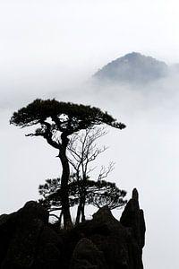 Silhouet van een dennenboom in Huangshan van