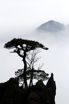 Silhouet van een dennenboom in Huangshan von Simon Hazenberg