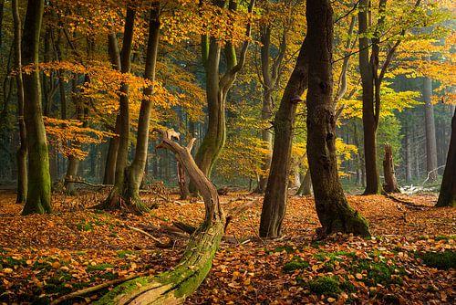 Het mysterieuze bos van