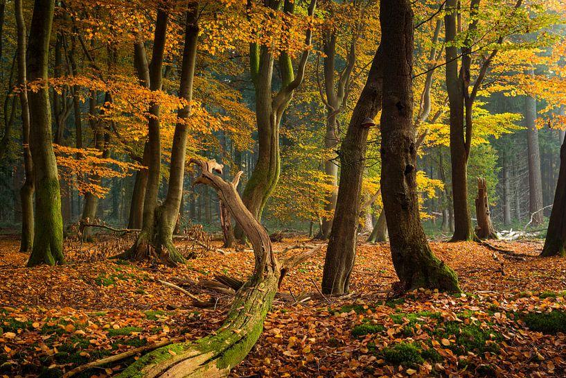 Het mysterieuze bos van Fotografie Egmond