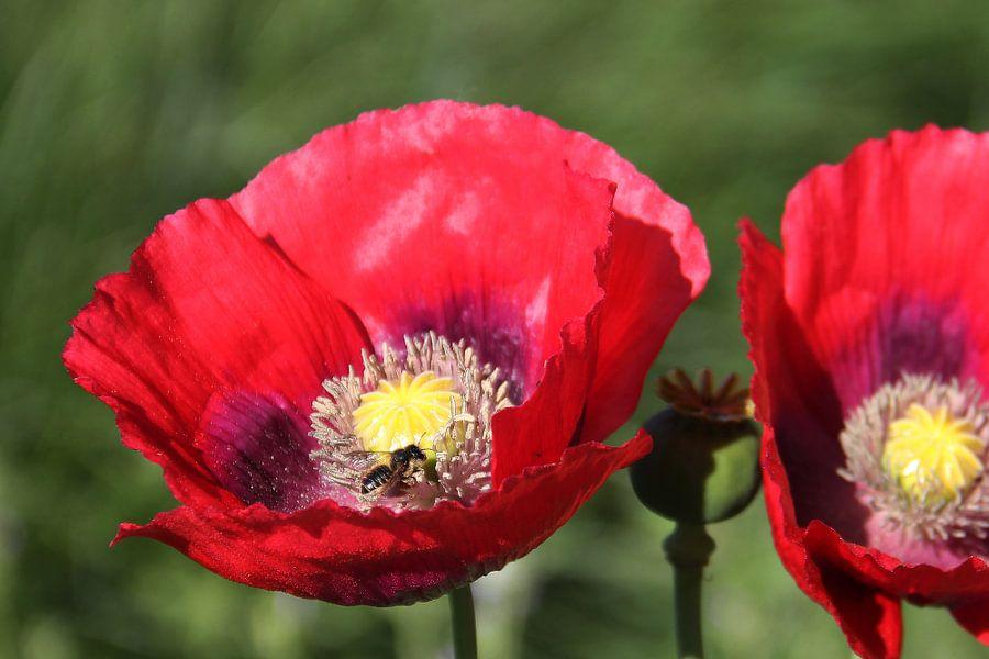 The Bee van Cornelis (Cees) Cornelissen