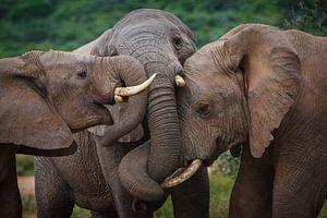 Elephant Hug van