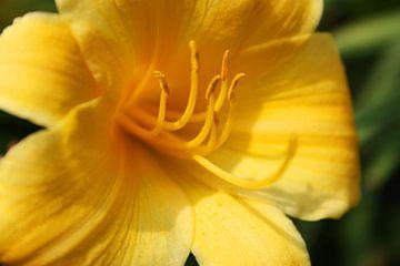 Yellow Dream von Anneke Verweij