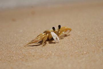 krab op het strand in Brazilie van
