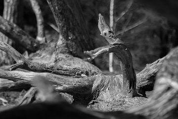Baumstamm in Schwarz und Weiß von Marco Leeggangers