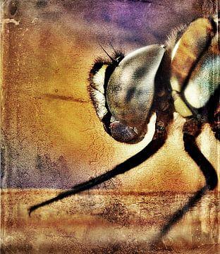 Dragonfly van Margreet Faber
