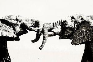 Olifanten kracht van Sharing Wildlife