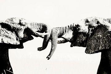 Macht der Elefanten von Sharing Wildlife