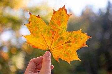 Herfstblad met oranje, geel en groene kleuren van Evelien Oerlemans