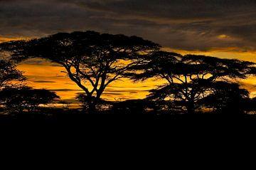 Afrikanischer Sonnenuntergang von Dirk-Jan Steehouwer