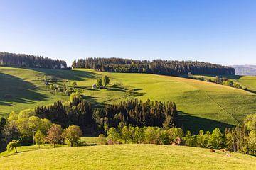 Opper-Schwarzwald bij St. Peter van Werner Dieterich