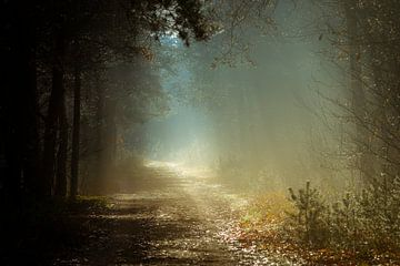 Waldweg von Génol de Jong