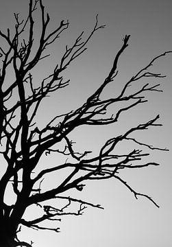 silhouet dode boom van Marieke Funke