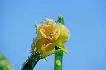 Blume und Eis von Ron van der Meer