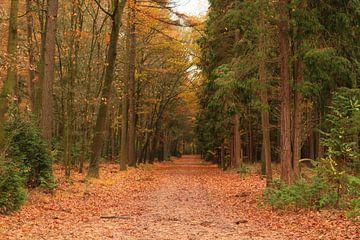 Bos in de herfst van Laura Reedijk