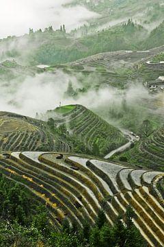Rijstterras in China Mistig herfstlandschap met rijstterrassen. China, Yangshuo, Longsheng Rijstterr van Michael Semenov