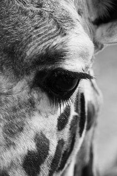 Giraffe von Tesstbeeld Fotografie