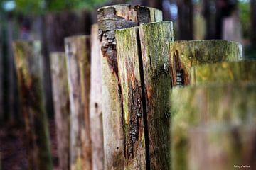 Holzzaun in den Wäldern. von Wendy Van Wuytswinkel