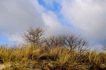 Strandvegetation von Ostsee Bilder