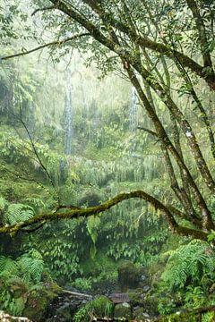 50 Schattierungen von Grün von Thijs Kupers