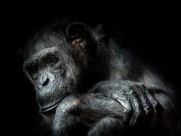 Chimpansee van Karin vd Waal