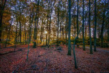 Sunstar in between the trees
