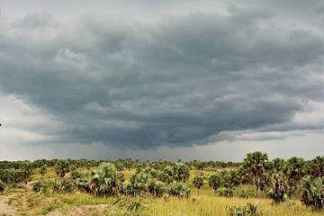 Palmendonner von Marije Zwart
