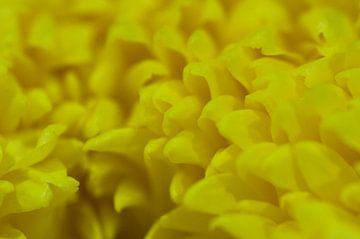 Gelbe Blätter von Simone Haneveer