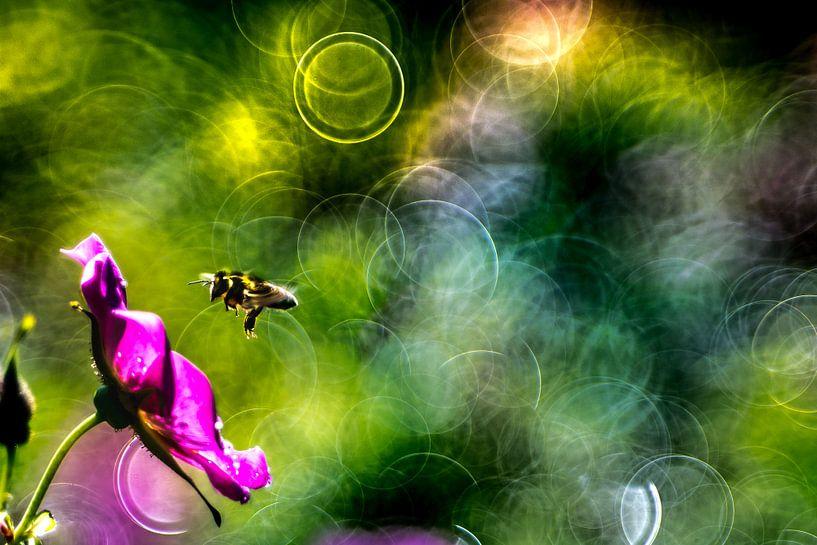 Biene von Udo Wanninger limitiete Auflage