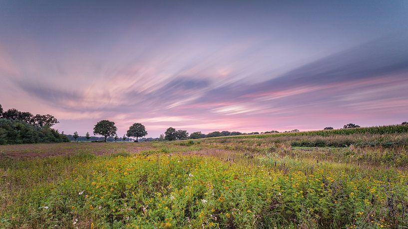 The purple sky van Davy Sleijster