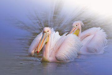 Rosa Pelikane von Ursula Di Chito
