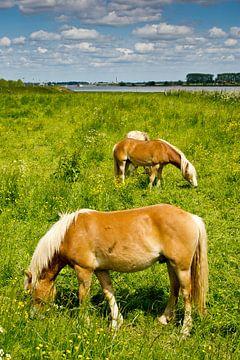 Pferde in den Auen von René Weijers