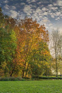 Herfst in het Stolwijks Park van Rossum-Fotografie