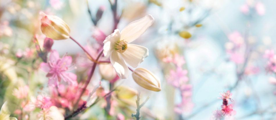 Lentebloesem van Corinne Welp
