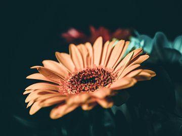 Blumen in Vintage und Farben von Mustafa Kurnaz
