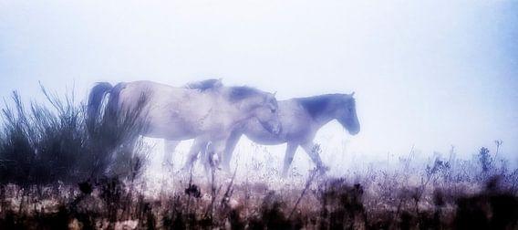 Wilde paarden in de mist van Rigo Meens