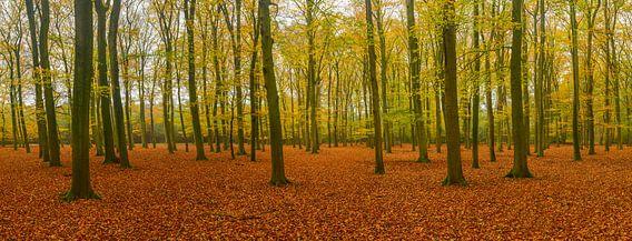 Beukenbos panorama in de herfst van Sjoerd van der Wal