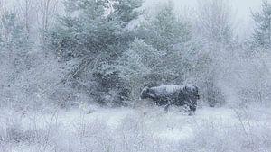 Sneeuwstorm van